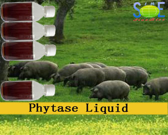 Chine Enzymes liquides d'alimentation des animaux de phytase en alimentation animale 20000u/mL Szym-PHY20L distributeur